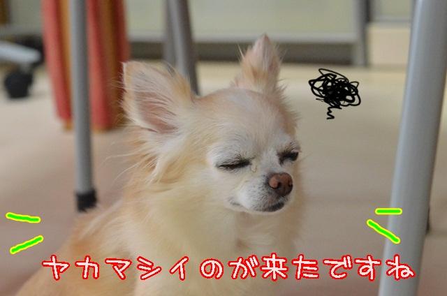 DSC_5454_201408142206056d1.jpg