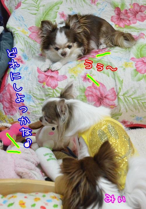 DSC_5477_2014081619285156b.jpg