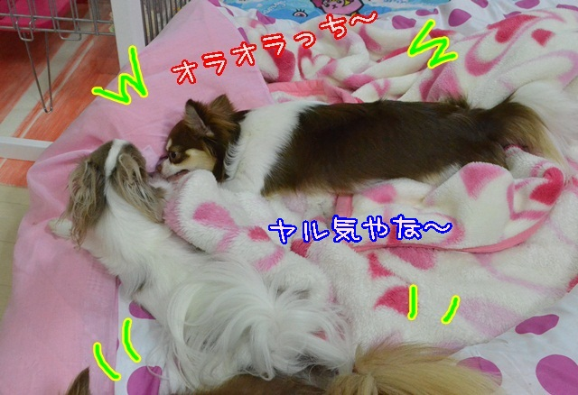DSC_5533_201408172113167d6.jpg