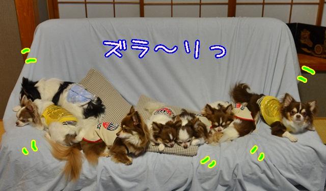 DSC_5578_201408181541013d4.jpg