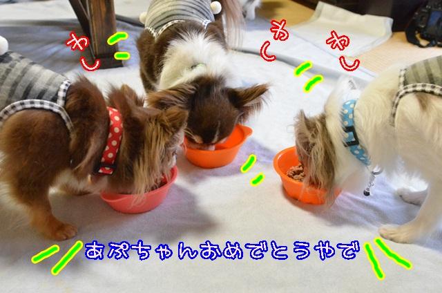 DSC_5606_20140819215644a8a.jpg