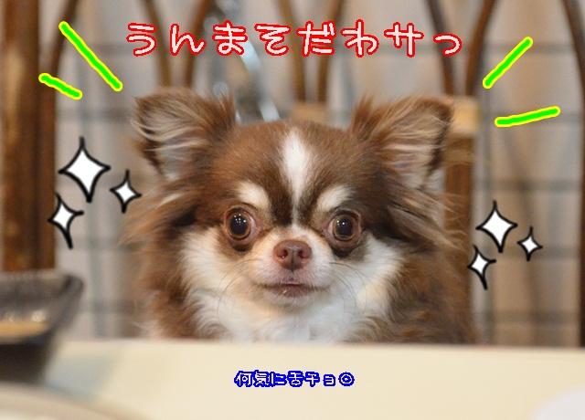 DSC_5630.jpg