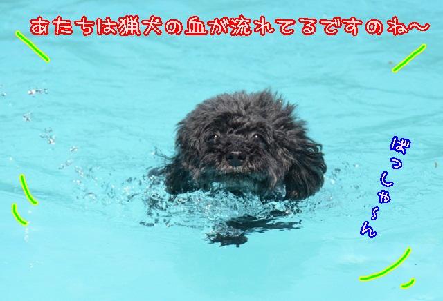 DSC_5804_20140827230744996.jpg