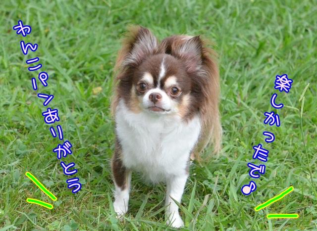 DSC_5993.jpg