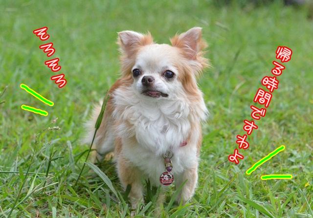 DSC_6034_20140830210050d99.jpg