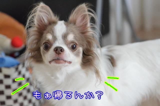 DSC_6296.jpg