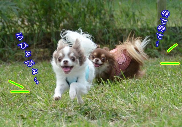 DSC_6375_20140915204644a51.jpg