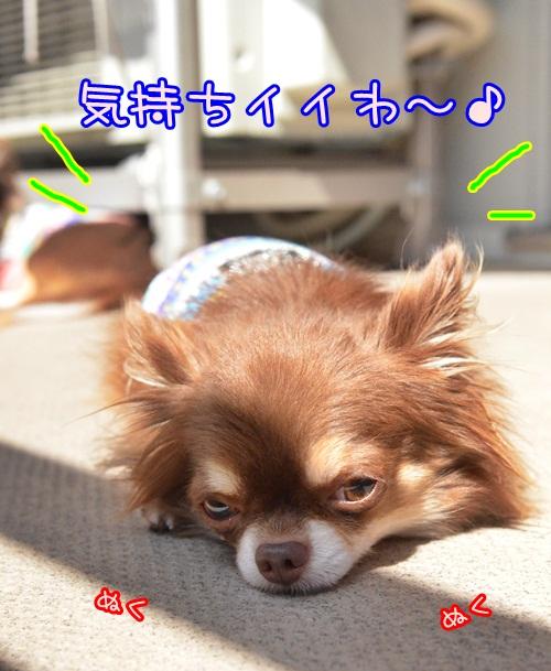 DSC_6509_20140922140247974.jpg