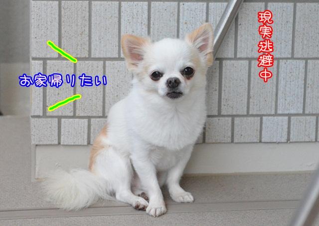 DSC_6531.jpg
