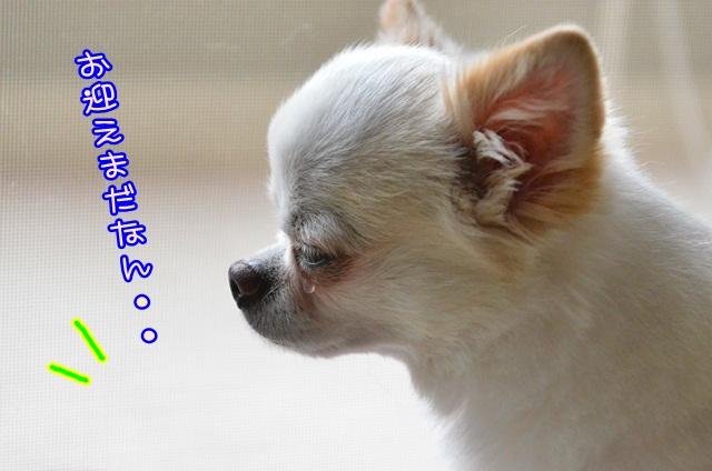 DSC_6567_20140925140241d7c.jpg