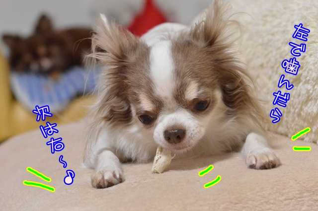 DSC_6803_20141009225726754.jpg