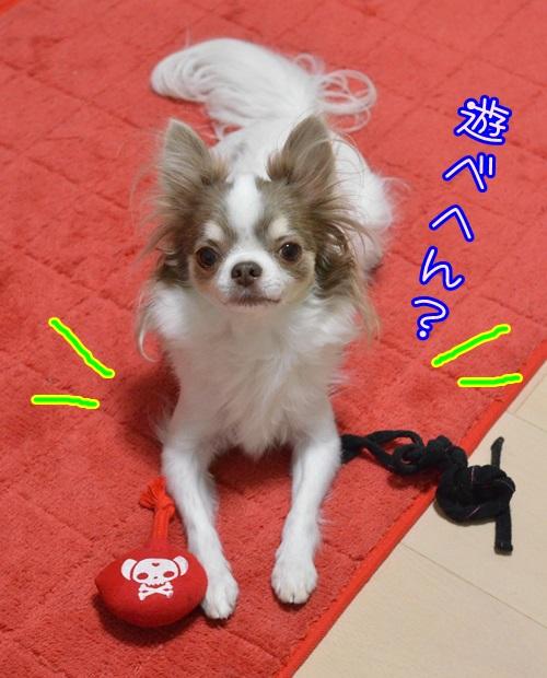DSC_6820_20141009163520144.jpg