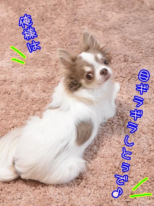 DSC_6907_20141014111025111.jpg