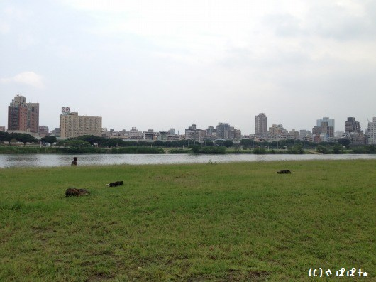 華中橋河岸10