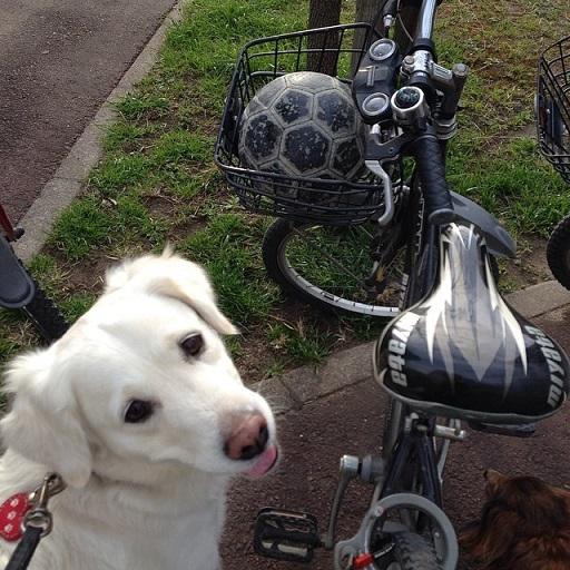 Juddy自転車