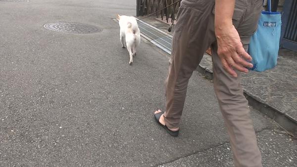 ママと散歩