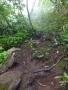泥んこの登山道