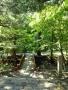 花園神社神橋