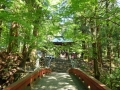 新緑の花園神社