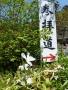 シャガの花が咲き始める