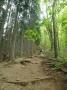 ゴンジリ峠への急坂の登山道-1