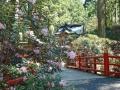 御岩神社境内のシャクナゲ