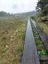 濡れた木道