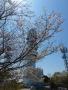 高鈴山の山頂-3