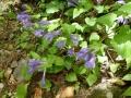 登山道の花-1