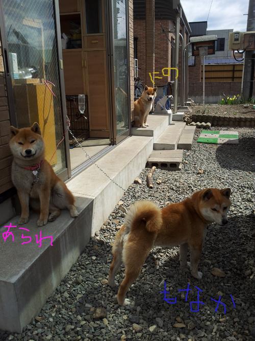 2014_0419_102448-2014-04-19-10-24-48_photo.jpg