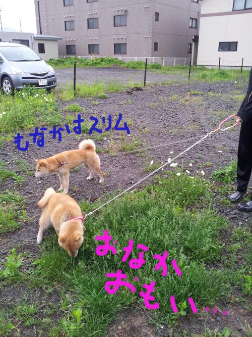 2014_0521_175204-2014-05-21-17-52-04_photo.jpg