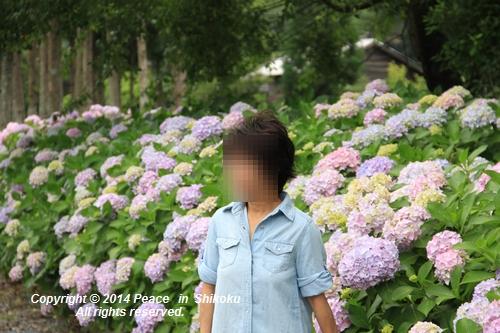 ajisai-0630-0917.jpg
