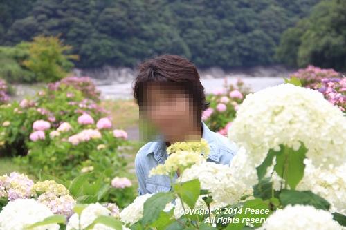 ajisai-0630-0972.jpg