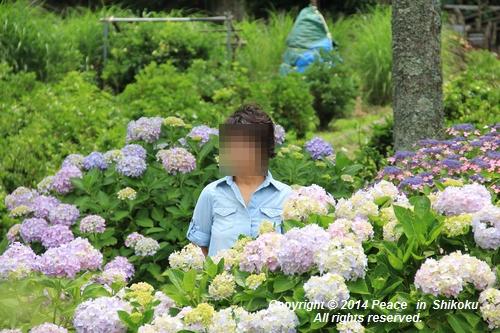ajisai-0630-0991.jpg