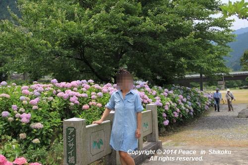 ajisai-0630-0999.jpg
