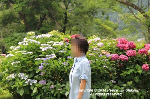 ajisai-0630-1193.jpg