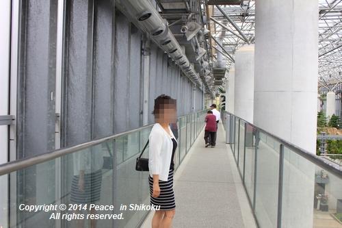 ijawa-0526-8538.jpg
