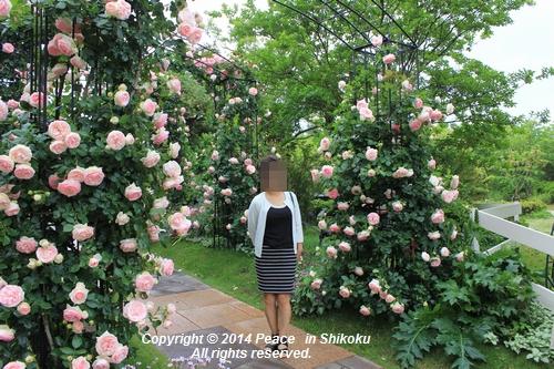 ijawa-0526-8611.jpg