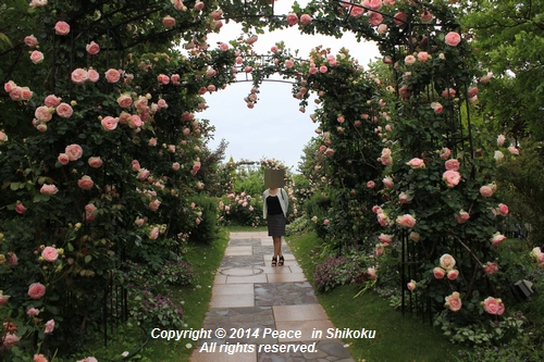 ijawa-0526-8616.jpg
