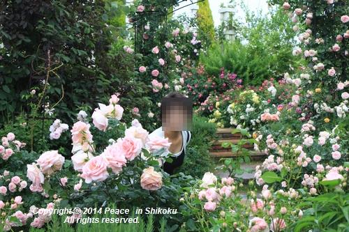ijawa-0526-8626.jpg
