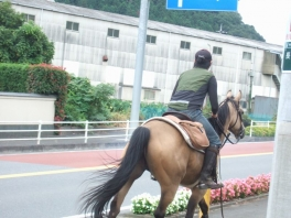 2014_0920同志みち山中湖0060