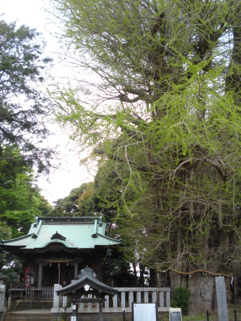 Tsurumine Hatchm-gu Shrine