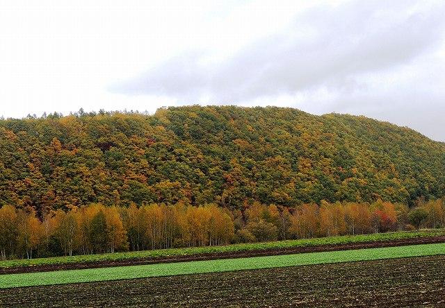 s-近くのお山