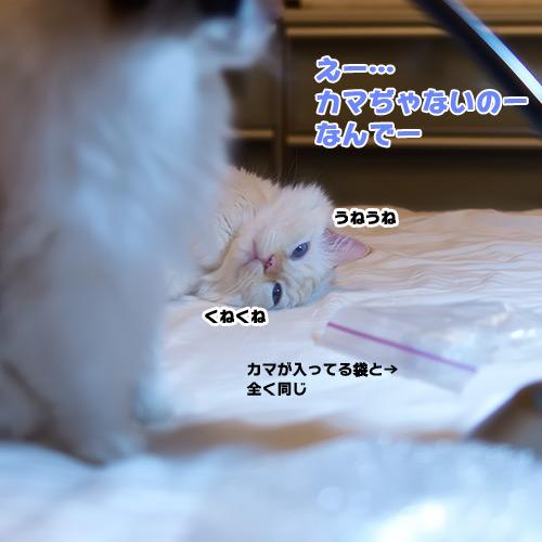 20140911_1.jpg