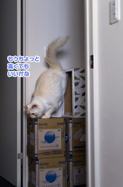 20140921_2.jpg