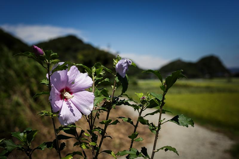 20140902_flowers_and_sky-02.jpg