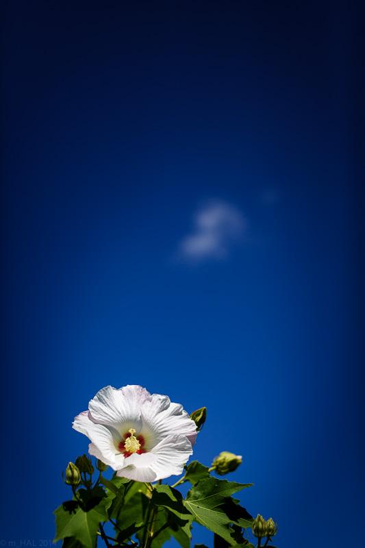 20140902_flowers_and_sky-03.jpg