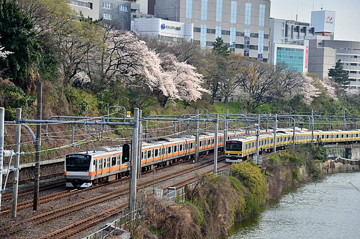 _DYA3136市ヶ谷桜並走