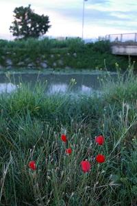 アルルの朝(1)花