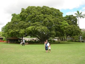 hawaii+201.jpg